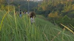 Man carrying dried long grass on head on the ridge,Ubud,Bali,Indonesia Stock Footage
