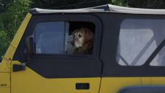Dog in Jeep HD - stock footage