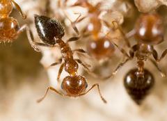 Ant on the ground. Super Macro Stock Photos