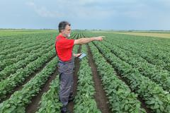 Farmer or agronomist in soy bean field with tablet - stock photo