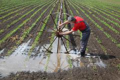 Agricultural scene, farmer in paprika field with watering system Stock Photos