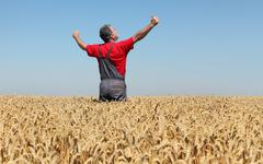 Agricultural scene, farmer in wheat field, harvest time Stock Photos
