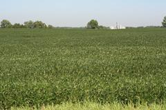 Soybean Cultivation in Maryland Stock Photos
