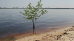Lonely tree in the water Stock Footage
