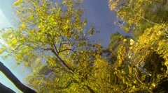 Underwater view of yellow autumn trees above water surface Stock Footage