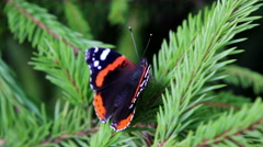 Butterfly on a needles branch Arkistovideo