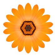 Orange Mandala Flower Ornament. Kaleidoscope Pattern Isolated Stock Photos
