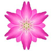 Pink Mandala Flower Ornament Kaleidoscope Pattern Isolated Stock Photos
