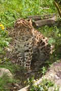 Panther portrait at zoo park Stock Photos