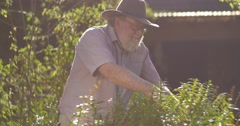 Gardening elderly senior retired grandfather man retirement age outdoors Stock Footage