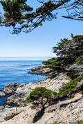 Lone Cypress between Sunset Point and Midway Point - stock photo