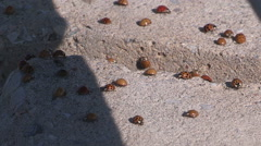 Ladybugs covering highway overpass in Orillia Ontario Stock Footage