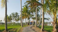 People walking on path sided by palm trees,Ubud,Bali,Indonesia Stock Footage