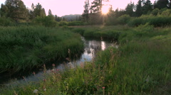 Sunset on WIldflowers and Creek Stock Footage