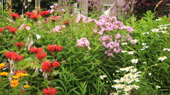 Flower bed in the garden Stock Footage