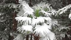 Beautiful snowfall in the tropics Stock Footage
