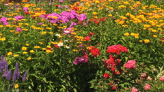 Mixed flower bed - stock footage