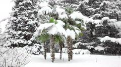 Beautiful snowfall in the tropics - stock footage