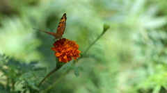 butterfly with flower - stock footage