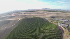 Field Of Vines - South California Stock Footage