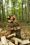Pile of firewood in the autumn forest. - stock photo