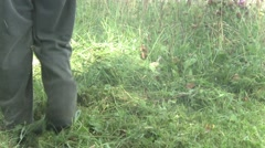 The man with the trimmer mowing overgrown grass. Stock Footage