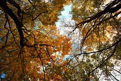 Autumn leaves on the tops of the trees against the blue sky. Stock Photos
