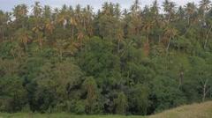 Palm trees on slope of hill,Ubud,Bali,Indonesia Stock Footage
