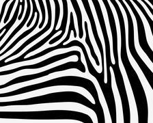 Skin of zebra Stock Illustration