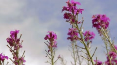 Purple flowers and sky background Stock Footage