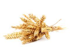Sheaf of wheat ears on white background. - stock photo