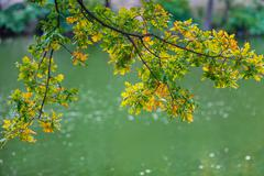 Beautiful branch of an autumn tree in a park - stock photo
