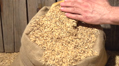 Male hands pour grain oats in a bag of sackcloth. Slow motion 240 fps. Stock Footage