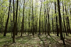 Green deciduous forest on a sunny day. Stock Photos