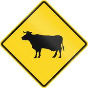 Cattle Crossing In Canada - stock illustration