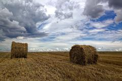 Harvested wheat field with hay rolls and a stormy sky. Stock Photos
