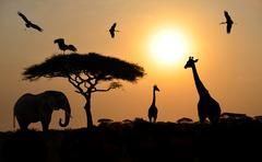 Animal silhouettes over sunset on safari in african savannah - stock photo