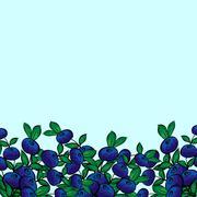Blue berry Bush blueberries - stock illustration