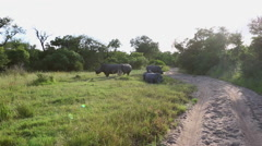 A group of five rhinos Stock Footage