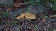 Mushrooms growing at base of tree Stock Footage