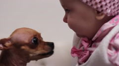 Cute brown chihuahua dog kissing 5 months old baby girl Arkistovideo