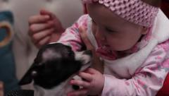 5 months old baby girl playing with chihuahua dogs - stock footage