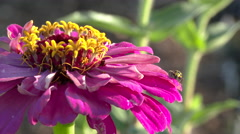 Garden Flower Pest Stock Footage