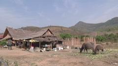 A cow near village, Luang Prabang, Laos Stock Footage
