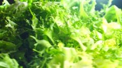 Heap of green frisse salad leaves on a rotating plate Stock Footage