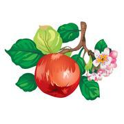 apple-tree branch vector - stock illustration