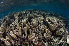 Fragile Coral Reef - stock photo