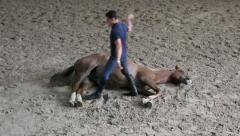 Horse training, horse show, man trust to horse Stock Footage
