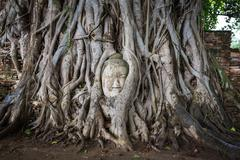 Head of Buddha statue in the tree roots at Wat Mahathat, Ayutthaya, Thailand. Stock Photos