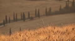 Spikes and cypresses road change focus Stock Footage